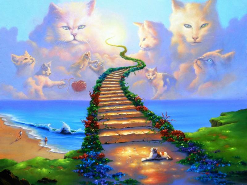 Пазл Собирать пазлы онлайн - Небесные коты