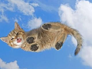 Собирать пазл Небесный кот онлайн