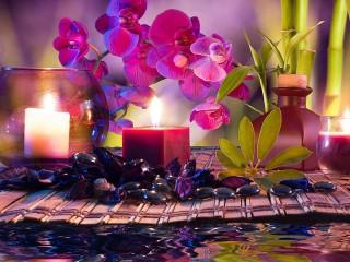 Собирать пазл Нежная орхидея онлайн