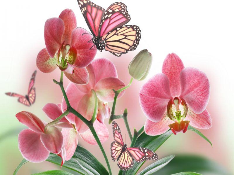 Пазл Собирать пазлы онлайн - Нежные орхидеи