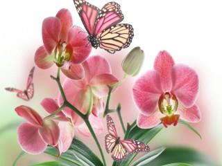 Собирать пазл Нежные орхидеи онлайн