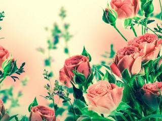 Собирать пазл Нежные розы онлайн