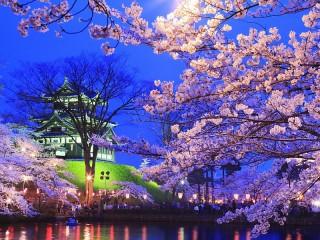 Собирать пазл Ночная сакура онлайн
