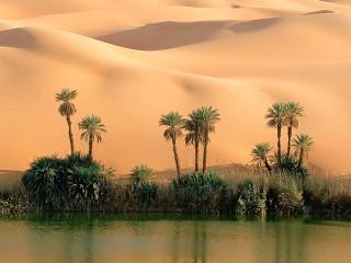 Собирать пазл Оазис в пустыне онлайн