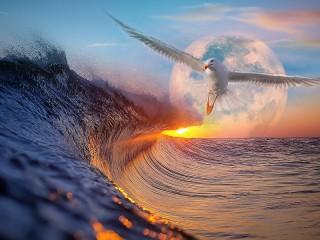 Собирать пазл Облетая волну онлайн
