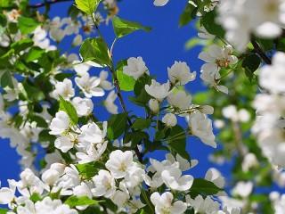 Собирать пазл Очарование весны онлайн