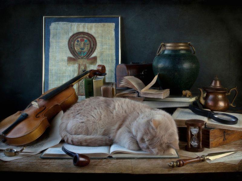 Пазл Собирать пазлы онлайн - Одаренный кот