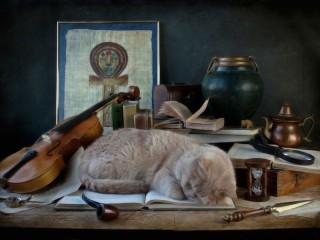 Собирать пазл Одаренный кот онлайн