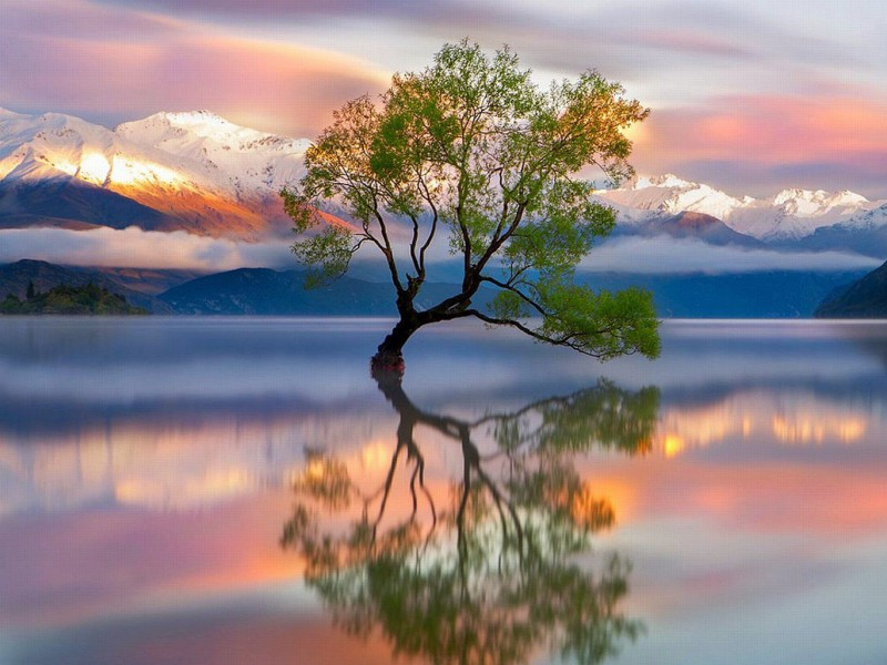 Пазл Собирать пазлы онлайн - Одинокое дерево