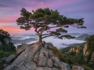 Собирать пазл Одинокое дерево онлайн