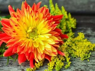 Собирать пазл Огненный цветок онлайн