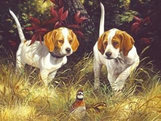 Собирать пазл Охотничьи собаки онлайн
