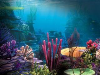 Собирать пазл Океанские кораллы онлайн