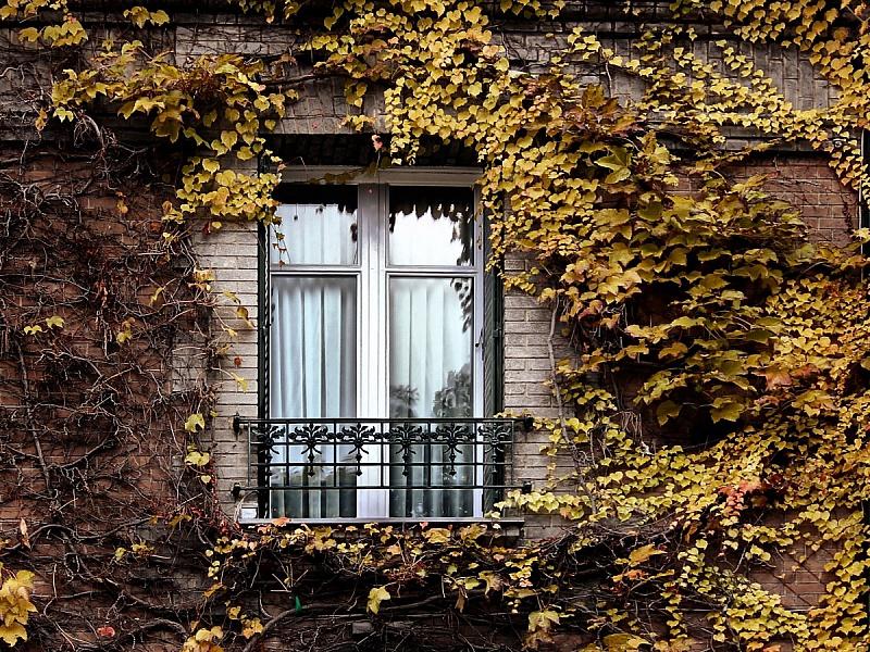 Пазл Собирать пазлы онлайн - Окно и плющ