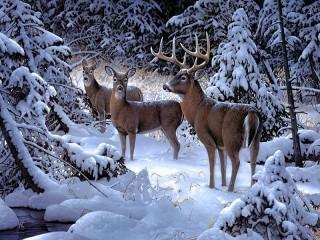 Собирать пазл Олени в лесу онлайн