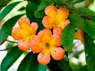 Собирать пазл Оранжевая красота онлайн