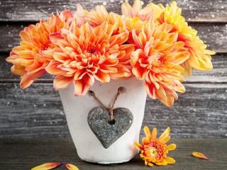 Собирать пазл Оранжевые хризантемы онлайн