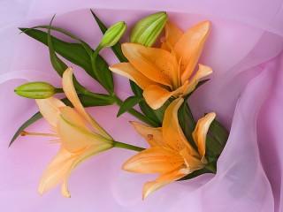 Собирать пазл Оранжевые лилии онлайн