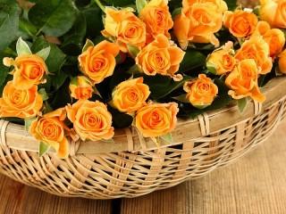 Собирать пазл Оранжевые розы онлайн