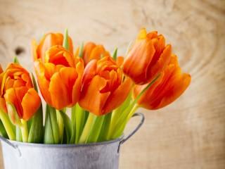 Собирать пазл Оранжевые тюльпаны онлайн