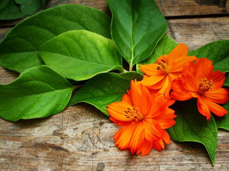 Пазл Собирать пазлы онлайн - Оранжевый цветок