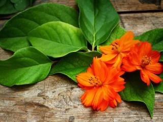 Собирать пазл Оранжевый цветок онлайн
