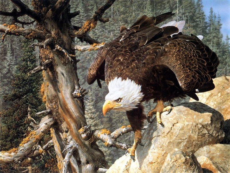 Пазл Собирать пазлы онлайн - Орел