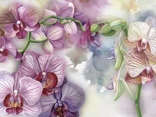 Собирать пазл Орхидеи онлайн