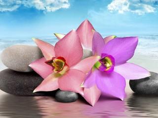 Собирать пазл Орхидеи и камни онлайн