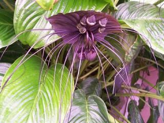 Собирать пазл Орхидея онлайн