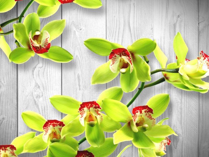 Пазл Собирать пазлы онлайн - Орхидея 11