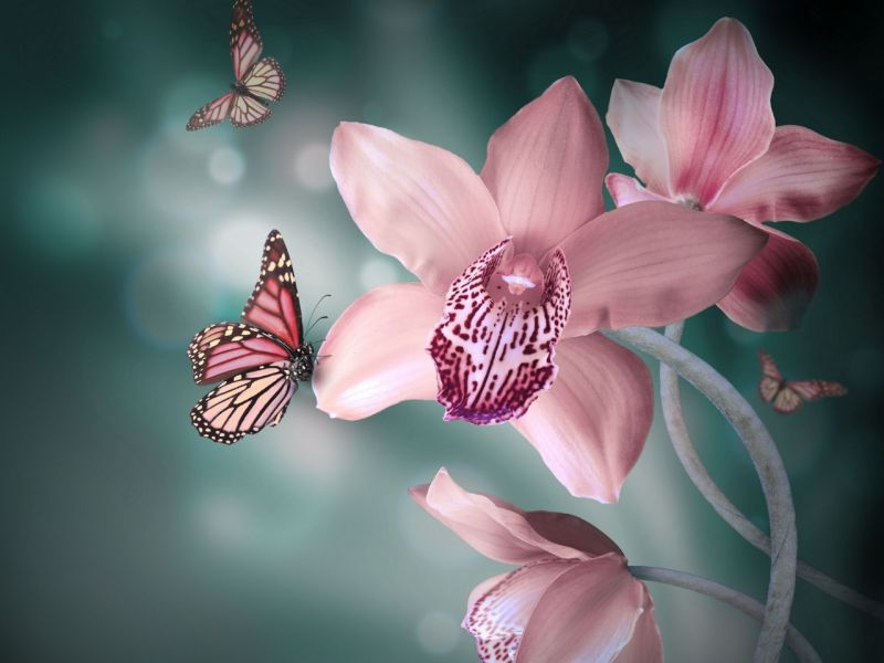 Пазл Собирать пазлы онлайн - Орхидея и бабочка