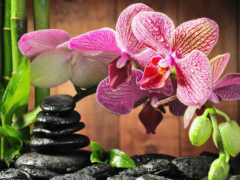 Пазл Собирать пазлы онлайн - Орхидея и бамбук