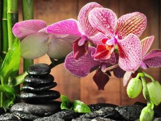 Собирать пазл Орхидея и бамбук онлайн
