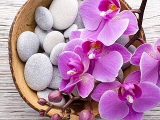 Собирать пазл Орхидея на гальке онлайн