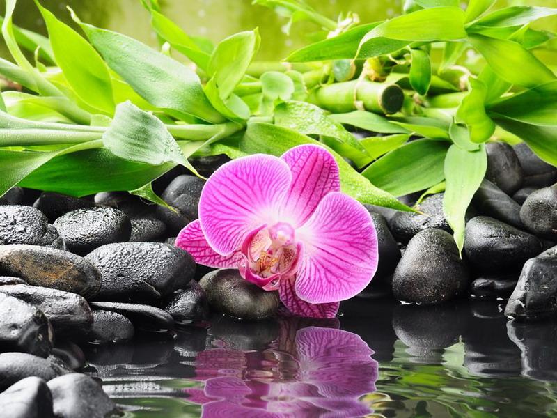 Пазл Собирать пазлы онлайн - Орхидея у воды