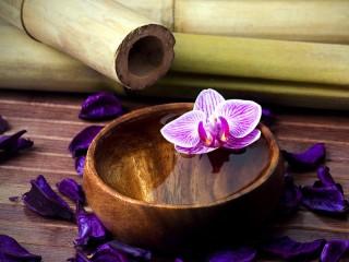 Собирать пазл Орхидея в воде онлайн