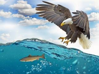Собирать пазл Орлан рыболов онлайн