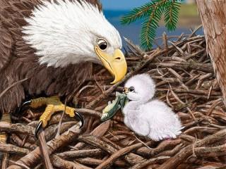 Собирать пазл Орёл и птенец онлайн