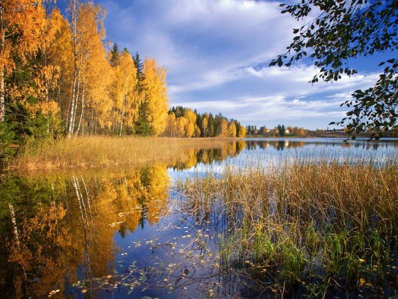 Пазл Собирать пазлы онлайн - Осень