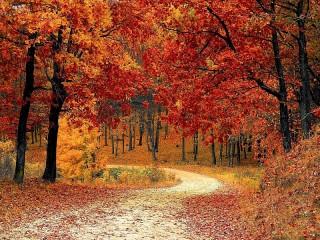 Собирать пазл Осень онлайн