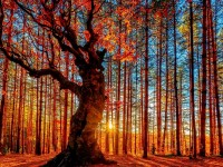 Собирать пазл Осень и солнце онлайн