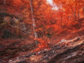 Собирать пазл Осень красная онлайн