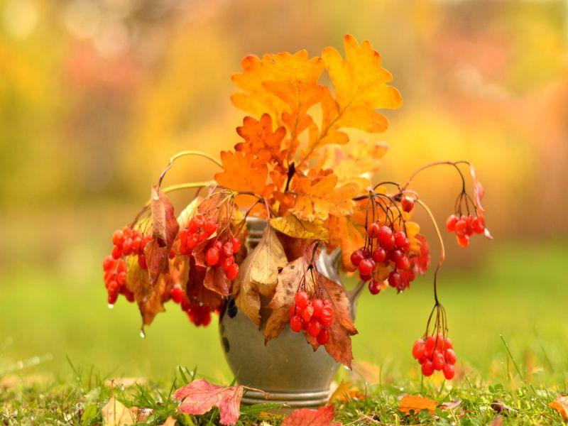 Осень пришла картинки, картинки путина картинки