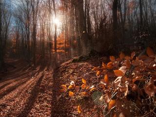 Собирать пазл Осень в Крыму онлайн