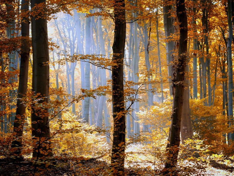 Пазл Собирать пазлы онлайн - Осень в лесу