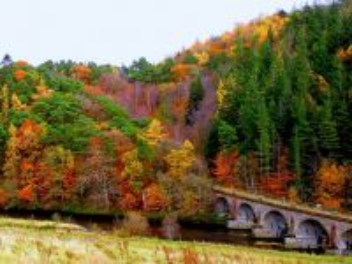 Собирать пазл Осенний лес онлайн