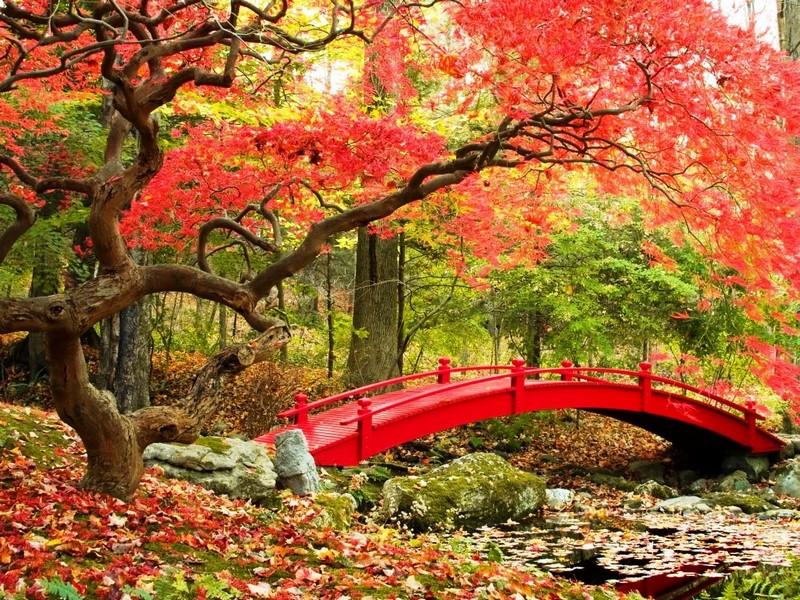 Пазл Собирать пазлы онлайн - Осень в Японии