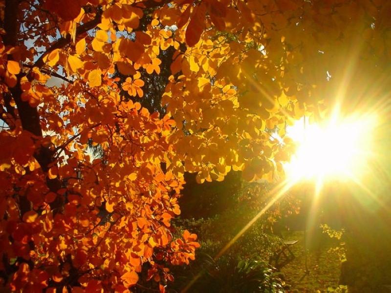 Пазл Собирать пазлы онлайн - Осеннее солнце
