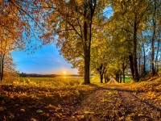 Собирать пазл Осеннее утро онлайн